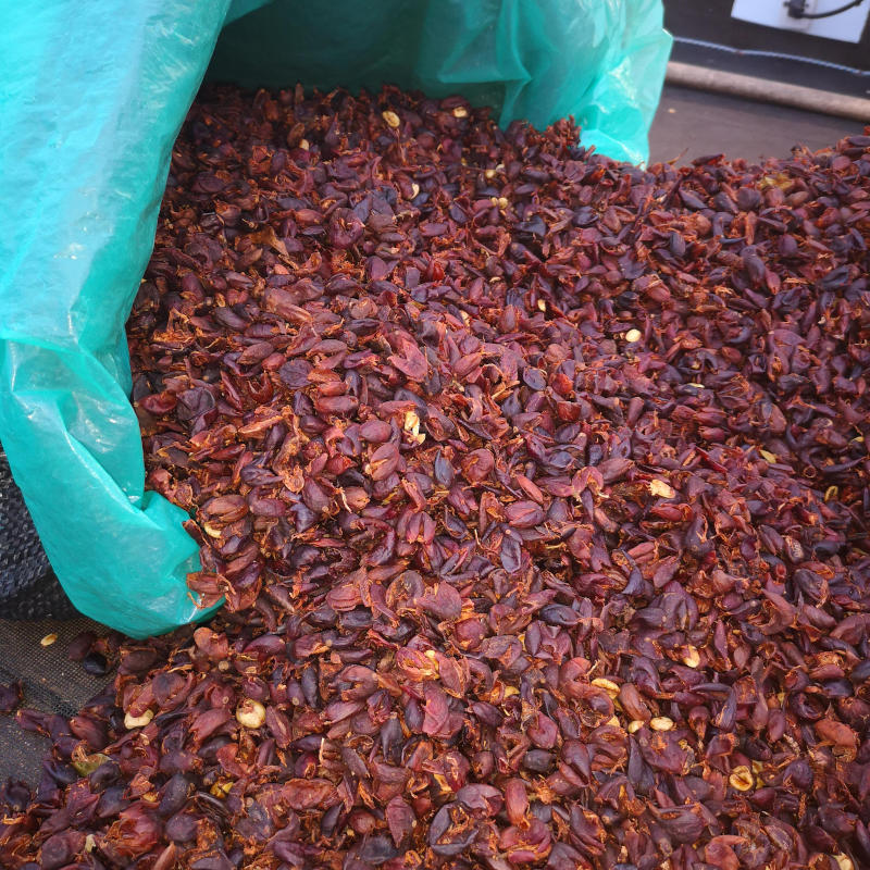 Cascara owoce kawowca coffee cherry tea husk of coffee